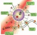 Sự lan truyền ung thư và khả năng trị liệu mới