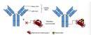 Các thuốc phóng xạ trong điều trị miễn dịch phóng xạ