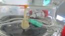 Tạo ra phổi nhân tạo để thử liệu pháp điều trị ung thư phổi